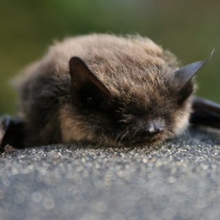 bat course, ecology training, ecology courses