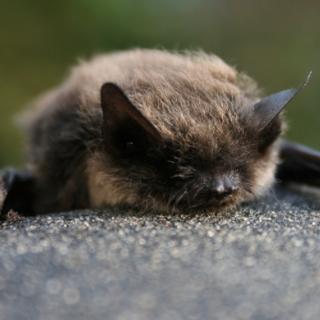 bat course, ecology training, ecology courses