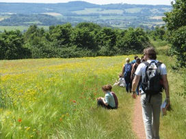 Acorn Ecology Field Training Courses