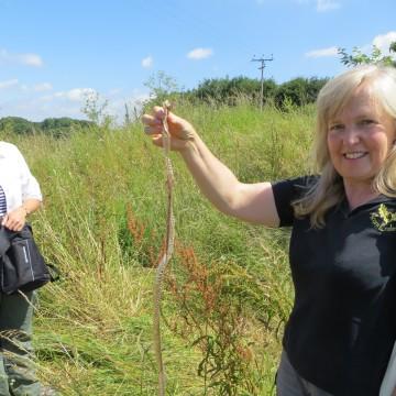 Sue Searle Acorn Ecology