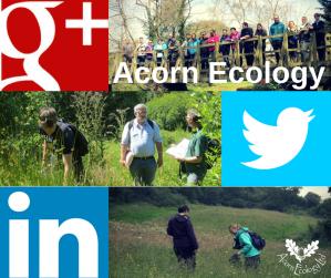 Acorn Ecology Social Media