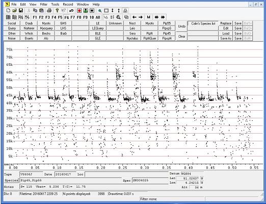 Pipstrelle bat sound analysis