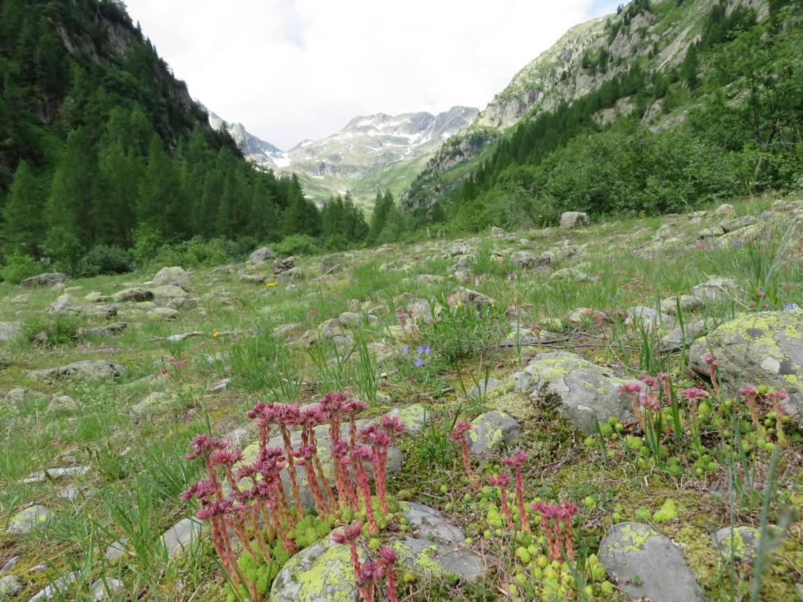 A botanical wonderland!